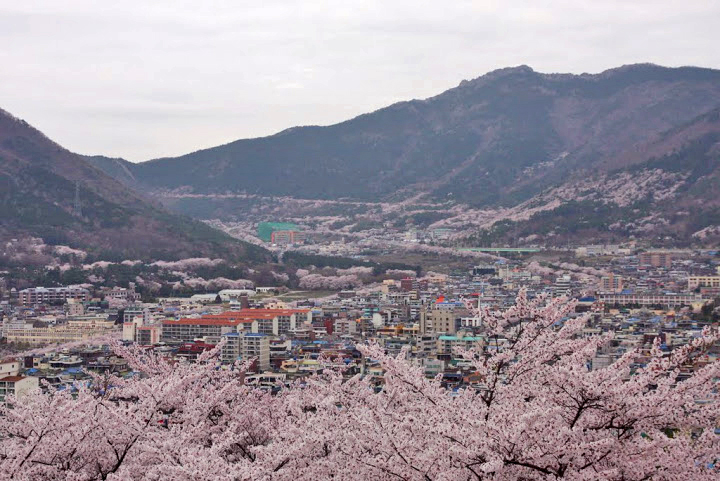 Town of Jinhae, cherry blossoms jinhae