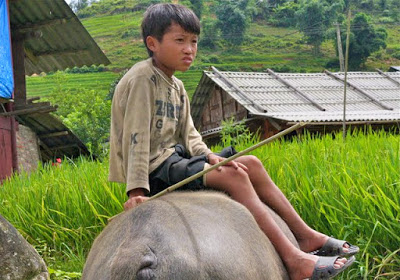 Boy riding water buffalo