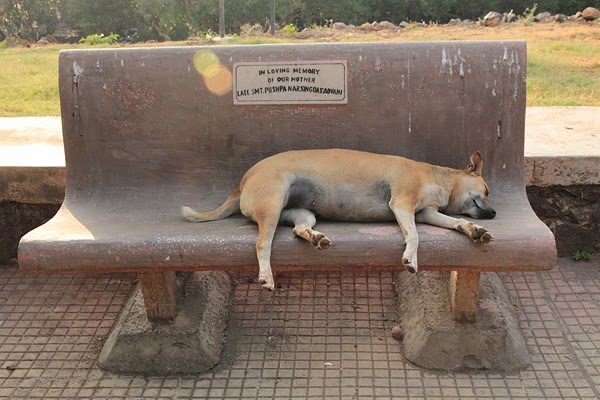 slumdogs, Photo Essay: Slumdogs of Mumbai, photos of dogs in mumbai