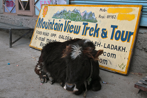 tour agencies in leh ladakh