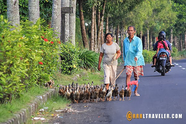 bali countryside, 18 things to know before you go to bali, bali travel guide, travel to southeast asia, southeast asia travel, popular destinations in indonesia, travel to indonesia, travel to bali, balispirit