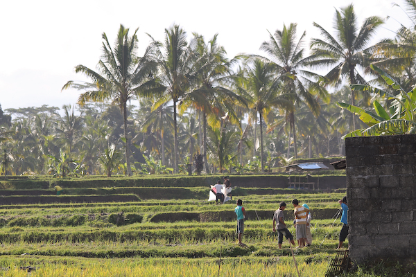 bali country, around ubud, balinese lifestyle