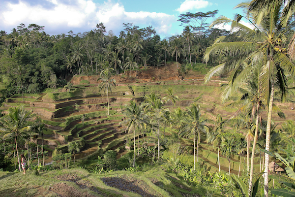 ubud Rice terraces of Tegallalang village