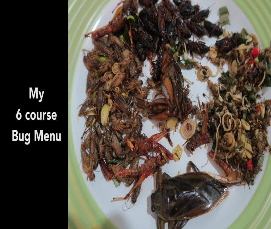 eating bugs in thailand, eating deep fried bugs in thailand