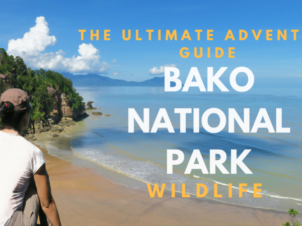 Bako National Park wildlife adventure, guide to bako national park