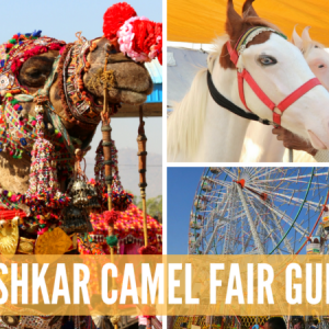 pushkar camel fair guide, guide to pushkar camel fair, pushkar camel fair, pushkar india, pushkar festival, camel festival india,