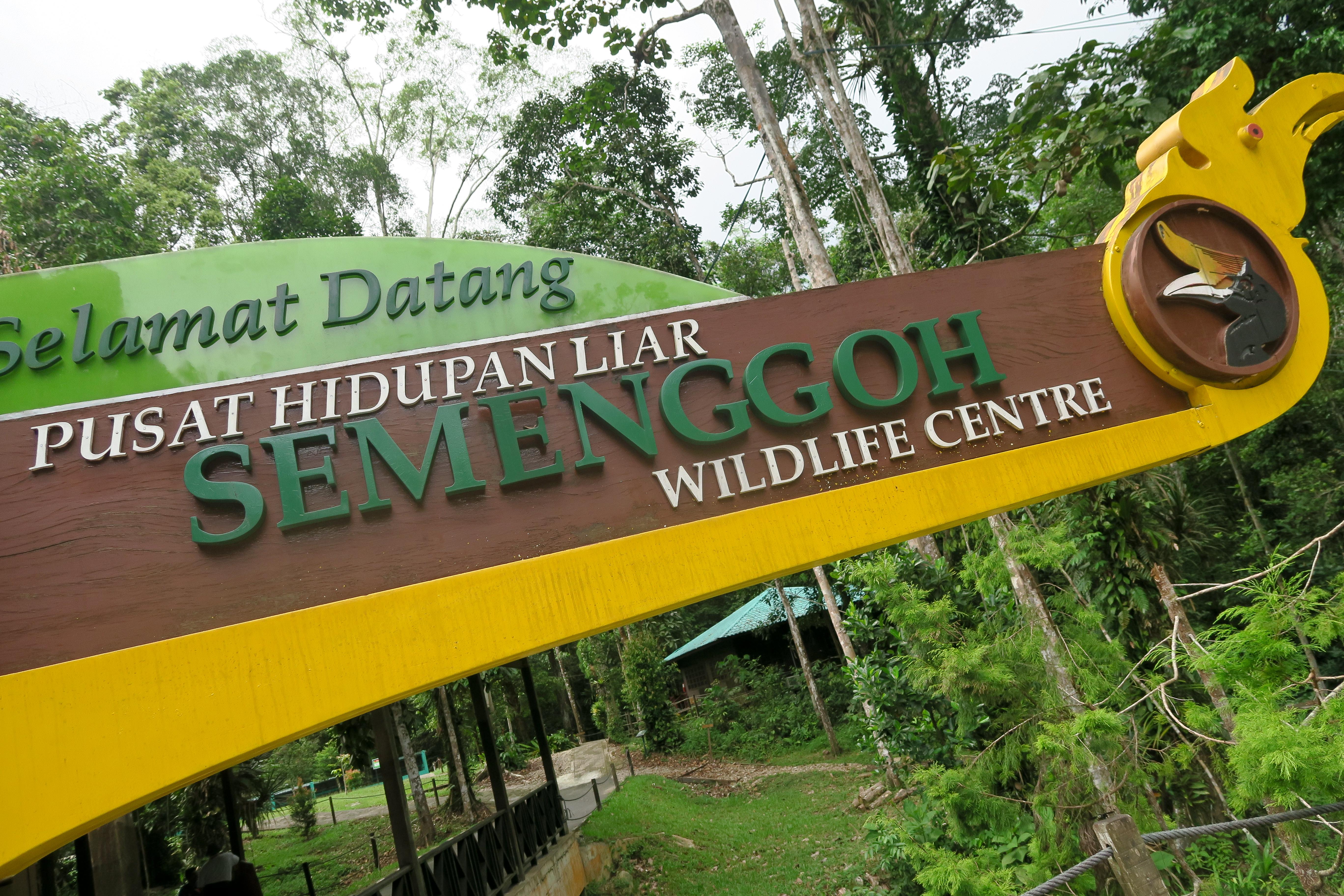 semenggoh wildlife reserve kuching,