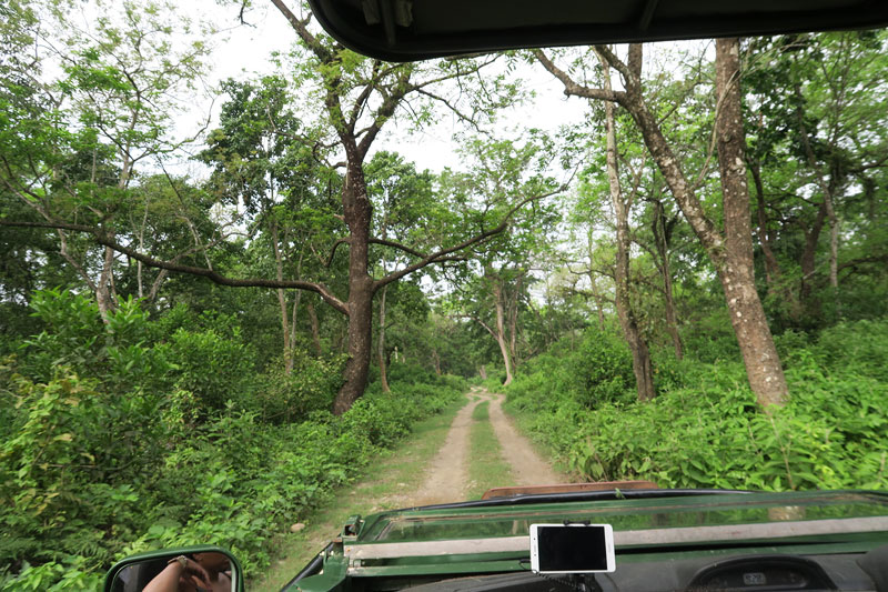 Jeep safari drives