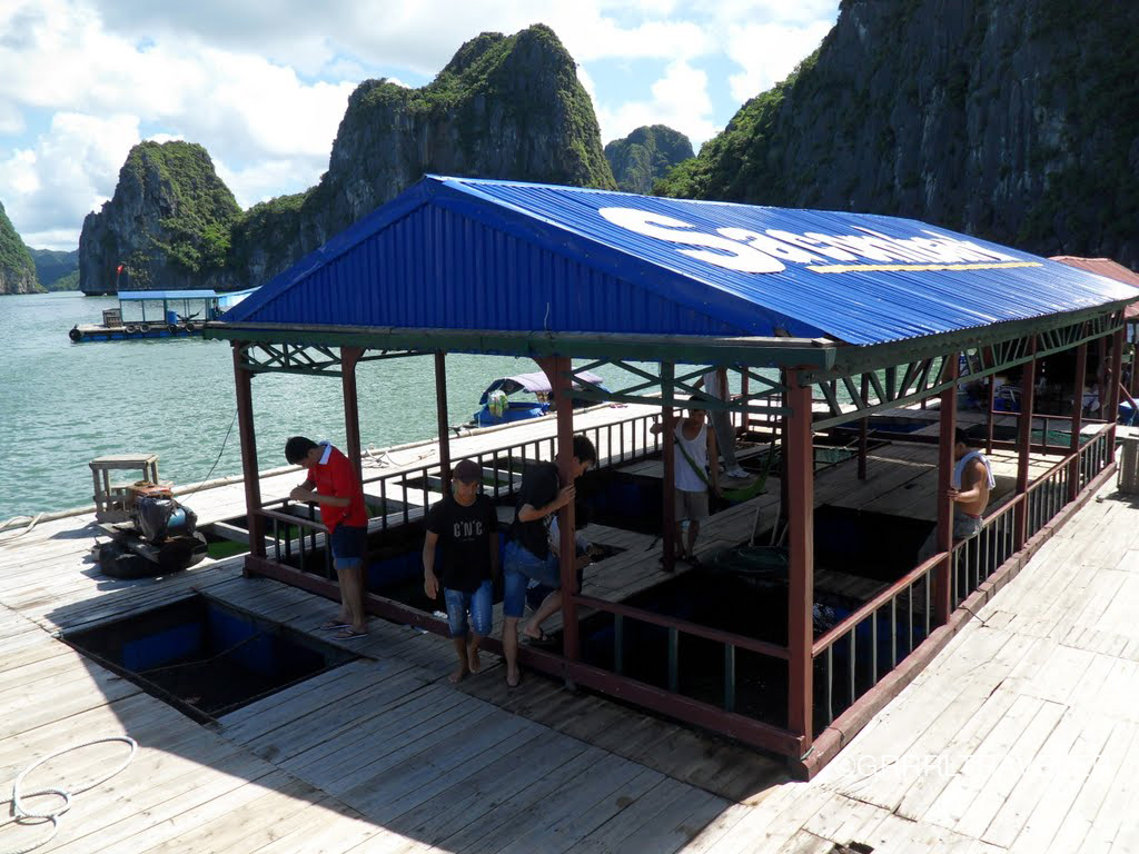halong Bay floating fish farm