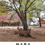 top attractions nara