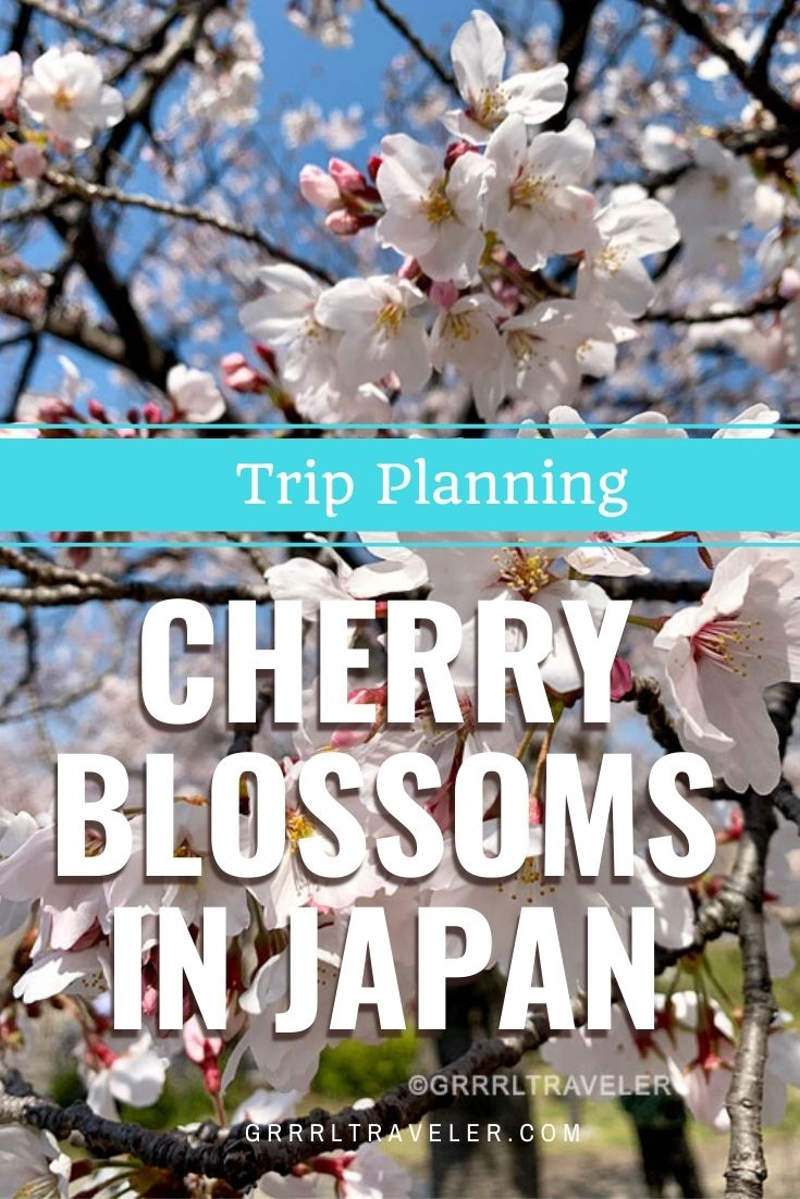 Things to Know about Cherry Blossoms in Japan